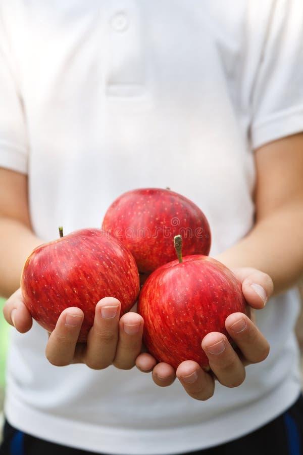 Niño irreconocible que sostiene manzanas rojas en manos foto de archivo