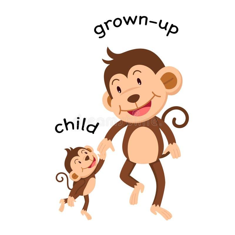 Niño opuesto de las palabras y crecido vector libre illustration
