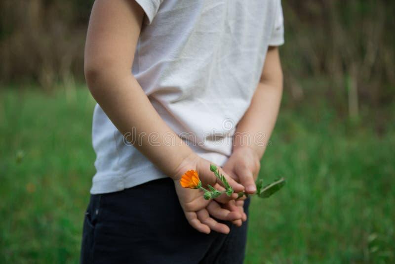 Ni?o peque?o con la flor en las manos imagenes de archivo