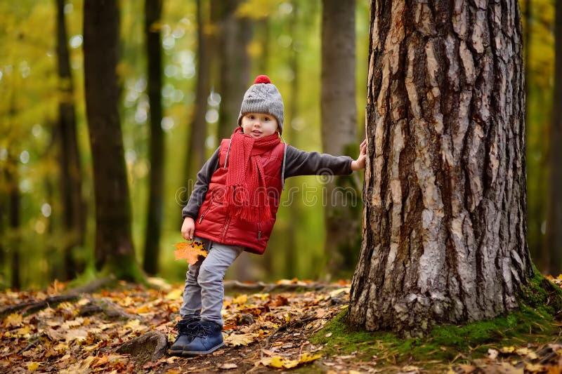 Niño pequeño durante paseo en el bosque en el día soleado del otoño imágenes de archivo libres de regalías