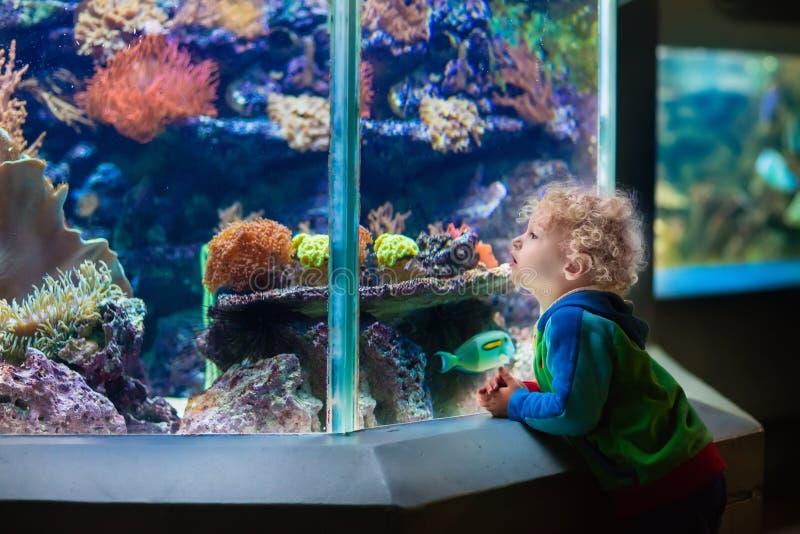 Niño pequeño en el acuario tropical foto de archivo