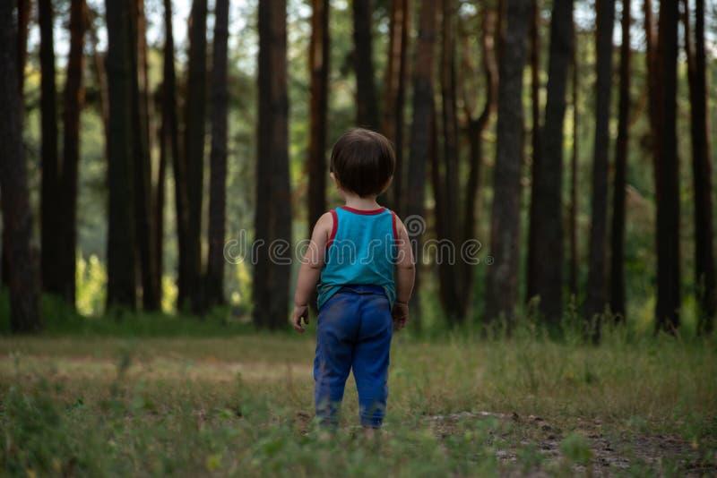 Niño pequeño en un césped delante de un bosque grande del pino imagen de archivo