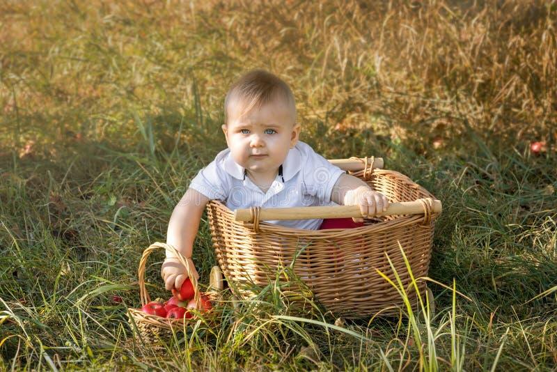 niño pequeño en un manzanar con una cosecha de manzanas fotografía de archivo