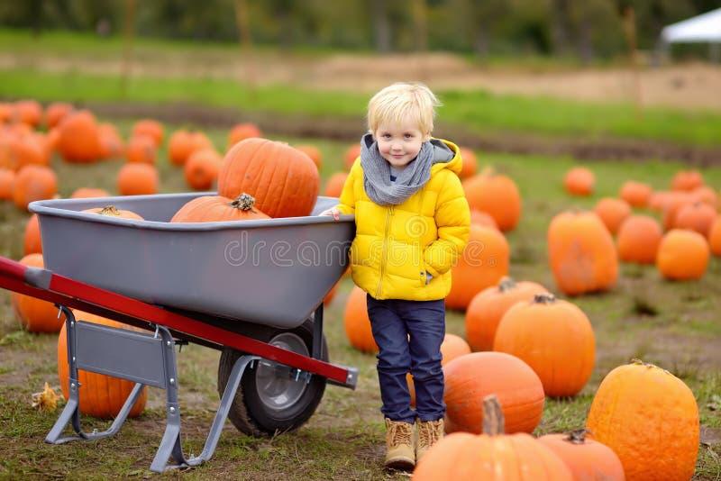 Niño pequeño en un viaje de una granja de la calabaza en el otoño Niño que se sienta en la calabaza gigante imagen de archivo libre de regalías