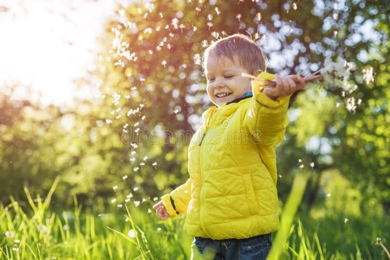Niño pequeño feliz que sostiene los dientes de león imagen de archivo libre de regalías