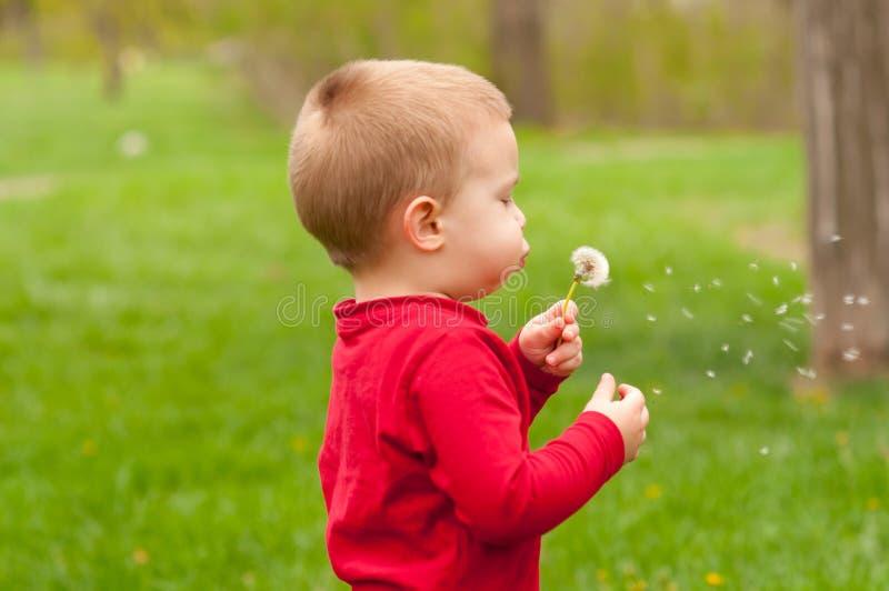 Niño pequeño lindo que sopla en el diente de león foto de archivo