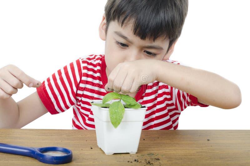 Niño pequeño que usa la lupa que mira la nueva planta fotografía de archivo libre de regalías