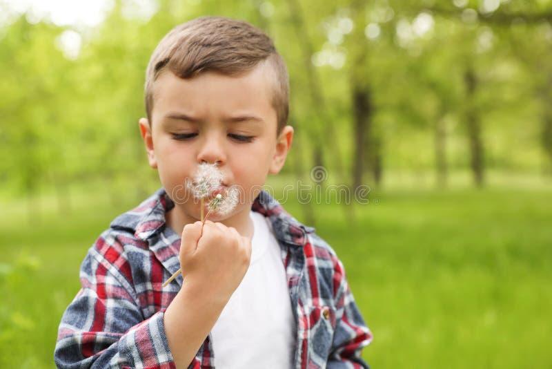 Niño pequeño sano que sopla en los dientes de león al aire libre imagenes de archivo