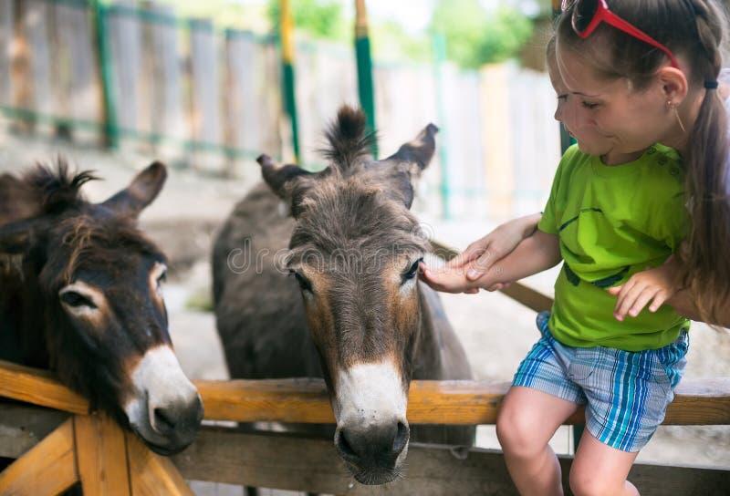 Niño pequeño y burro en parque zoológico fotos de archivo