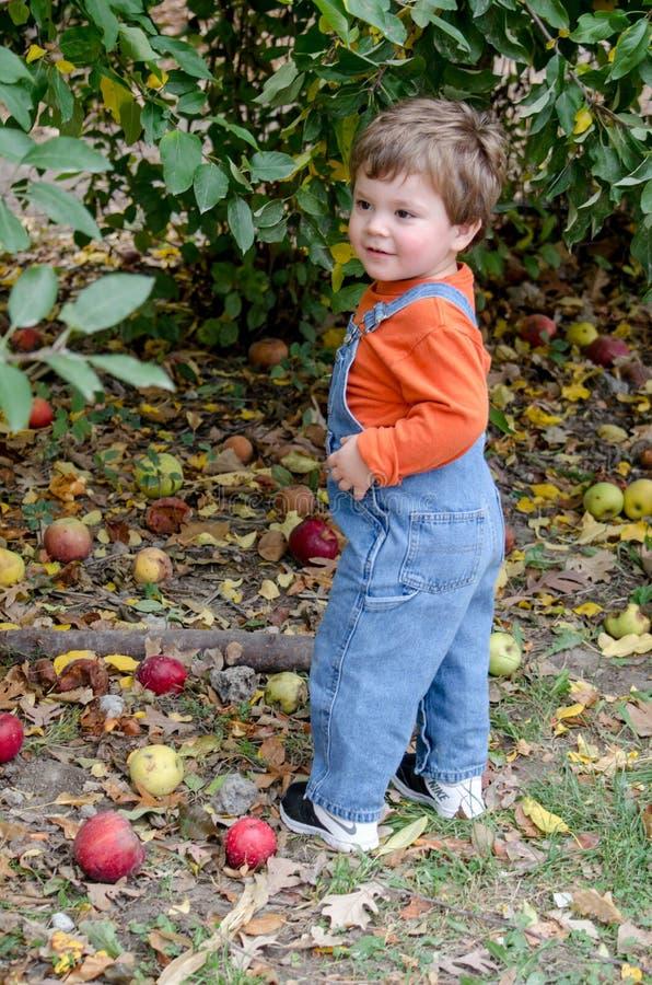 Niño que coge manzanas en una huerta imagen de archivo