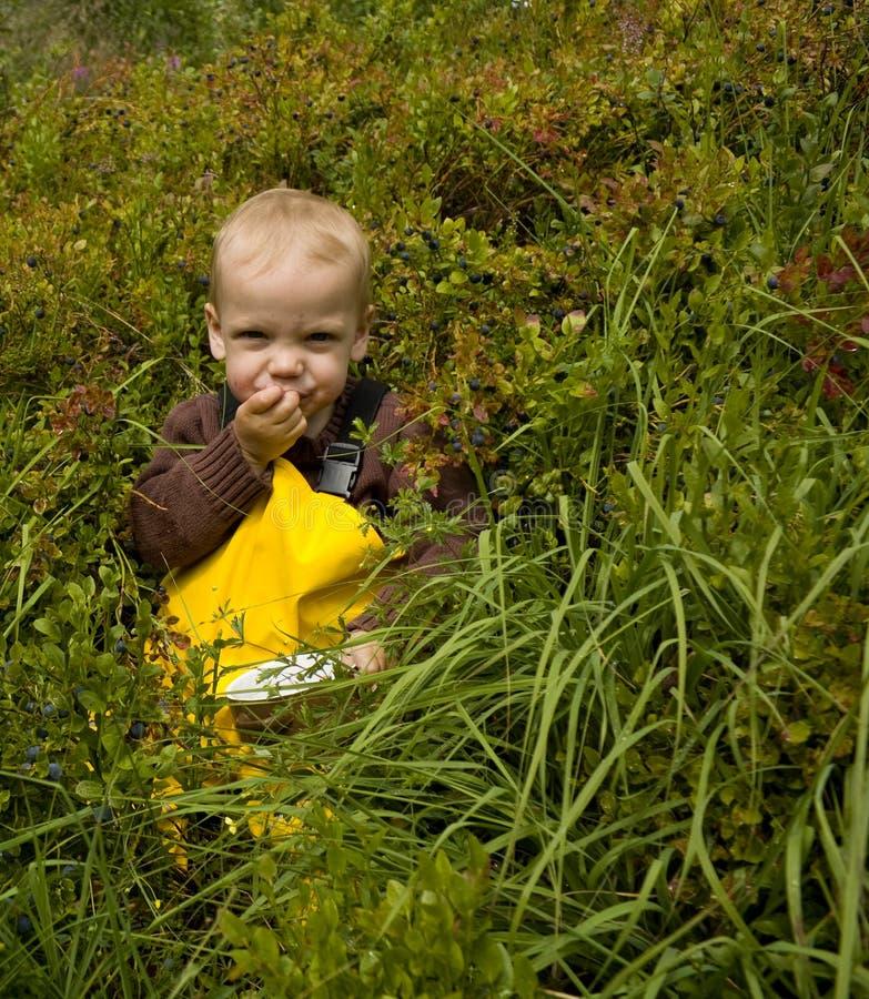 Niño que come los arándanos fotografía de archivo libre de regalías