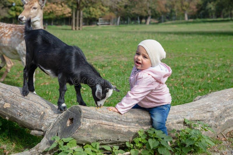 Niño que se sienta en una mano secada del tronco de árbol que alimenta una cabra fotos de archivo