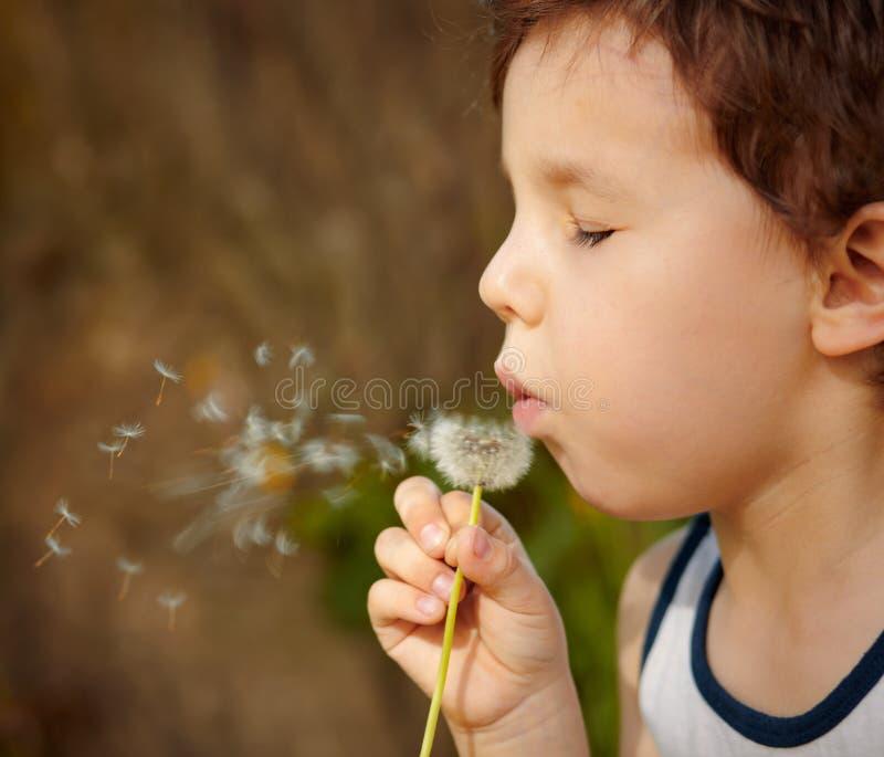 Niño que sopla un diente de león fotos de archivo libres de regalías
