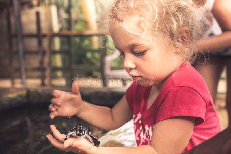 Niño que sostiene cuidadosamente la tortuga de mar en cuidado animal salvaje del concepto del cuarto de niños de la granja de la  fotos de archivo libres de regalías