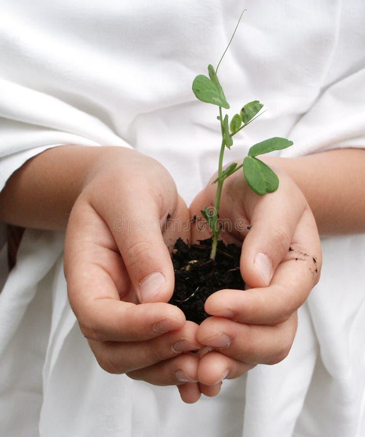 Niño que sostiene cuidadosamente una planta imagenes de archivo