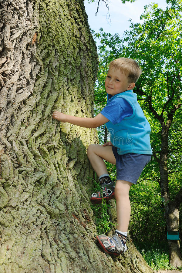 Niño que sube el árbol grande imagenes de archivo