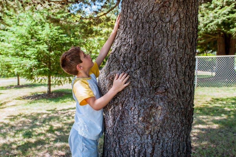 Niño que toca un árbol imágenes de archivo libres de regalías