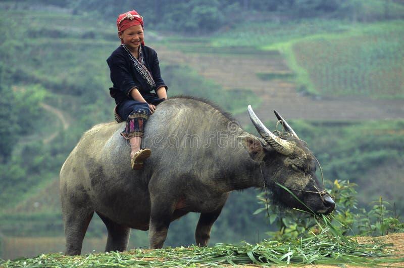 Niño rojo de Zao en búfalo. imagen de archivo