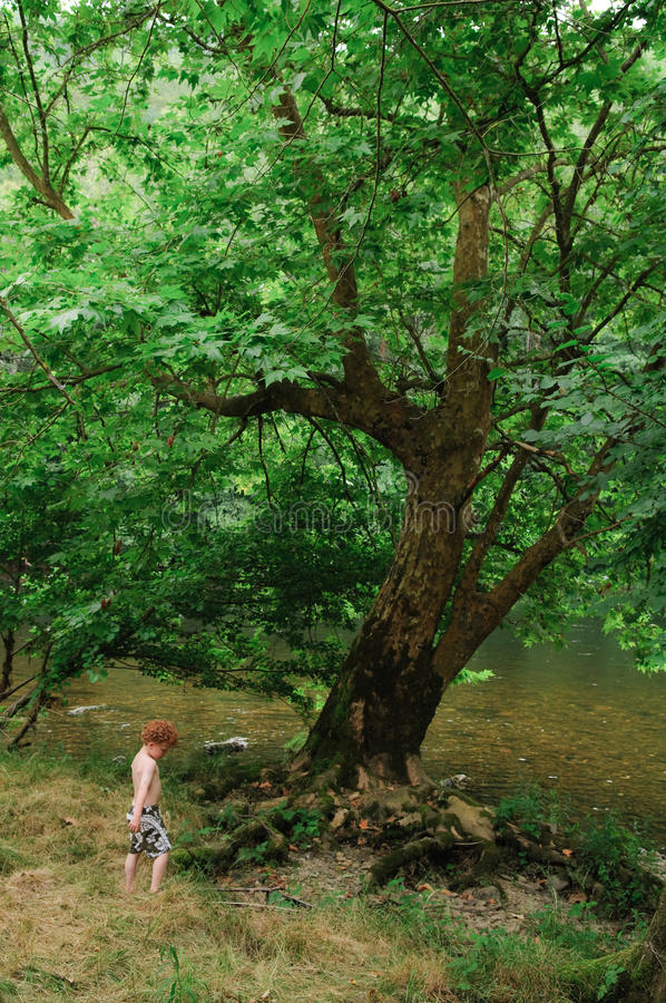 Niño y árbol fotografía de archivo