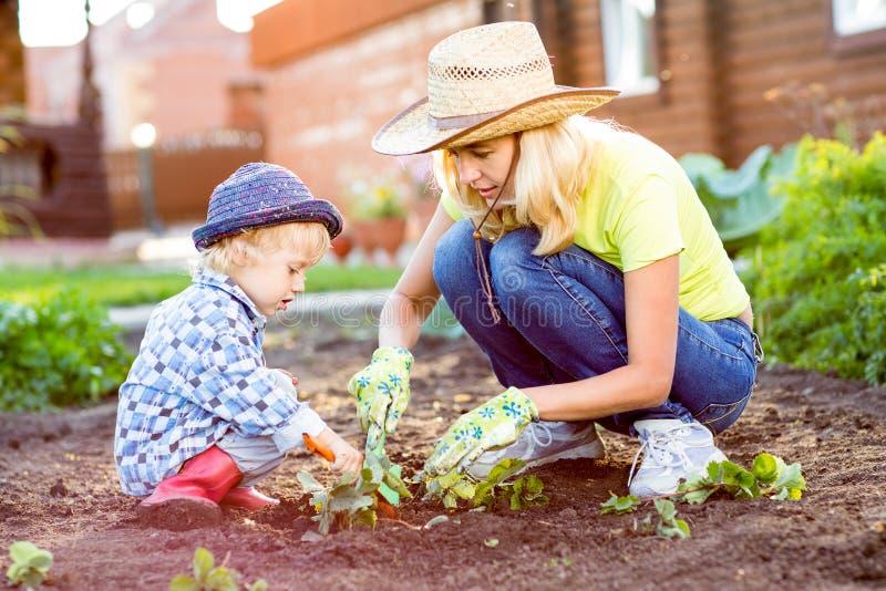 Niño y madre que plantan el almácigo de la fresa en suelo fértil afuera en jardín fotografía de archivo