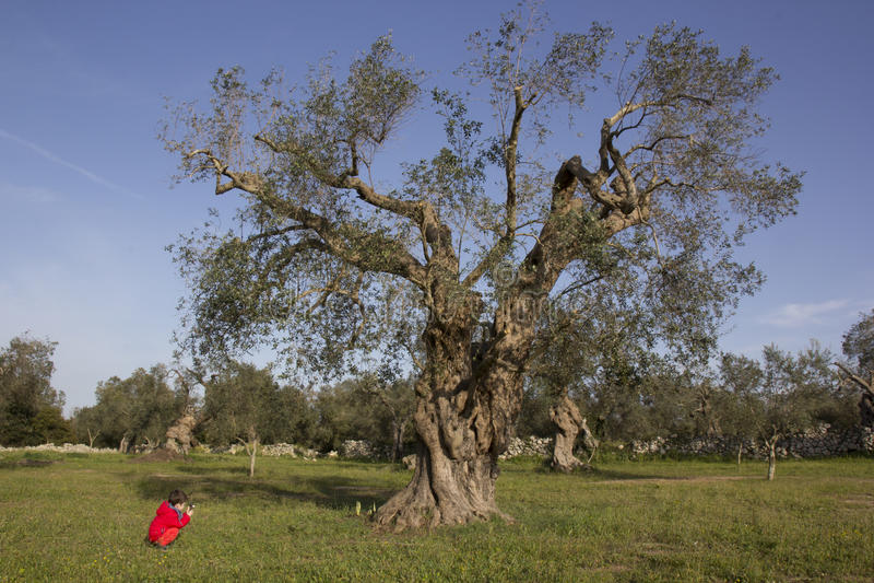 Niño y olivo imagen de archivo libre de regalías
