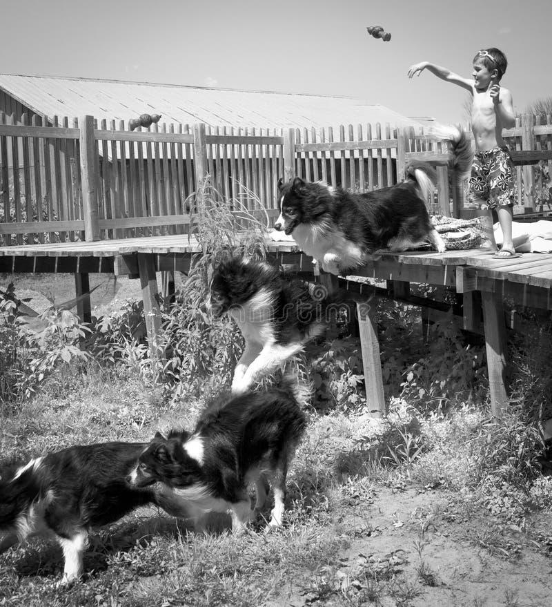 Niño y perro que juegan búsqueda foto de archivo