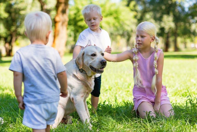 Niños agradables que juegan con un perro grande en el parque imagen de archivo libre de regalías
