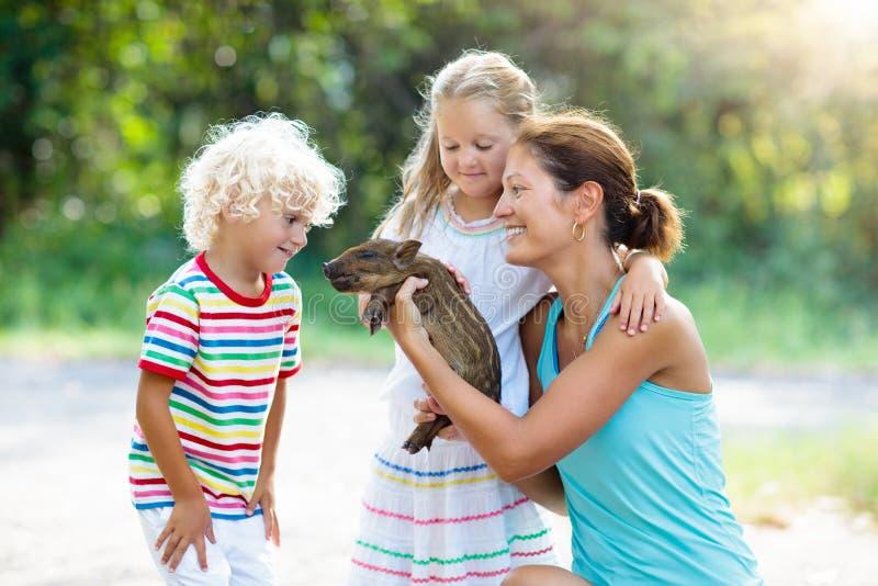 Niños con el animal del cerdo del bebé Niños en la granja o el parque zoológico imagenes de archivo