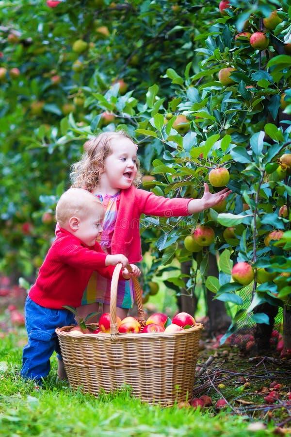 Niños con la cesta de la manzana imagen de archivo