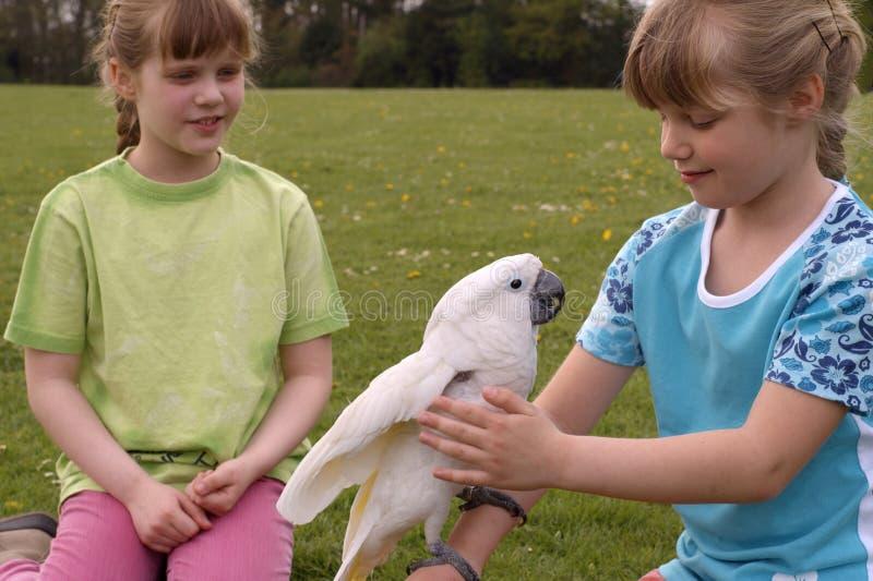 Niños con un cockatoo blanco imagen de archivo libre de regalías
