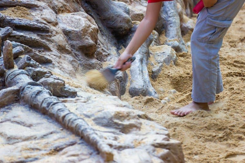Niños de la imagen del movimiento que aprenden alrededor, simulación de excavación de los fósiles de dinosaurio imagenes de archivo