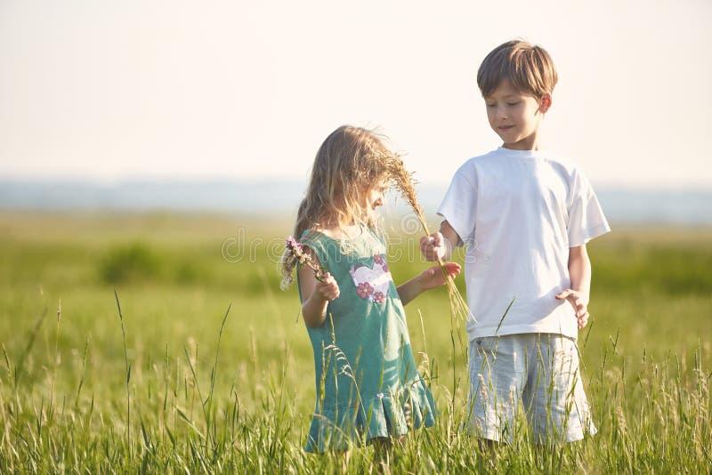 Niños en el campo en la mañana soleada del verano imagen de archivo libre de regalías