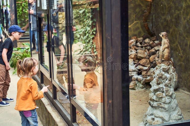 Niños en el parque zoológico que mira animales a través de un vidrio seguro imagen de archivo