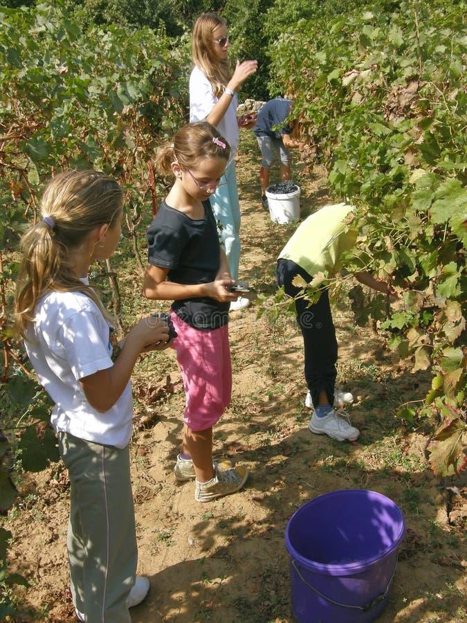 Niños en el viñedo fotografía de archivo