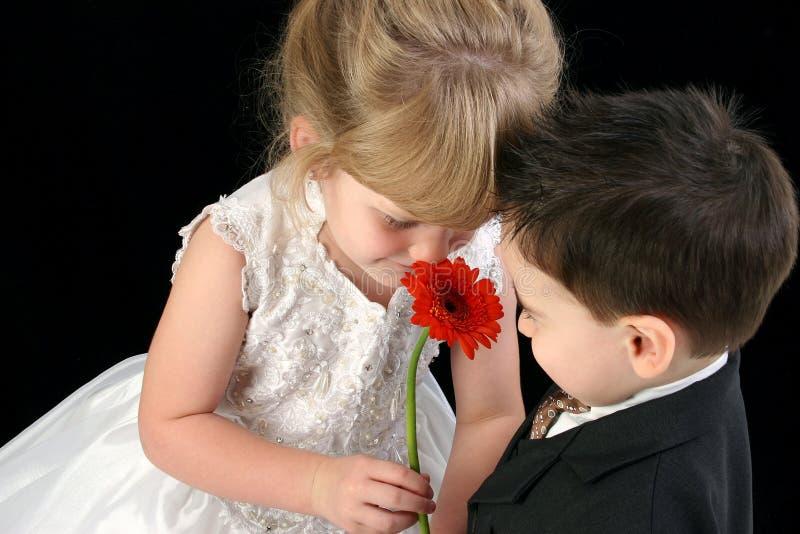 Niños jovenes adorables que huelen la margarita junto foto de archivo libre de regalías