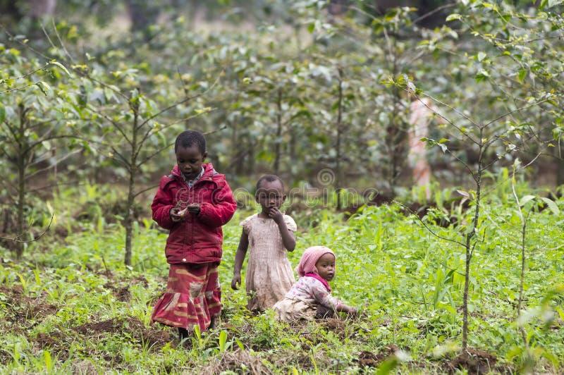 Niños locales que trabajan en los campos de la plantación del café y de plátano fotografía de archivo