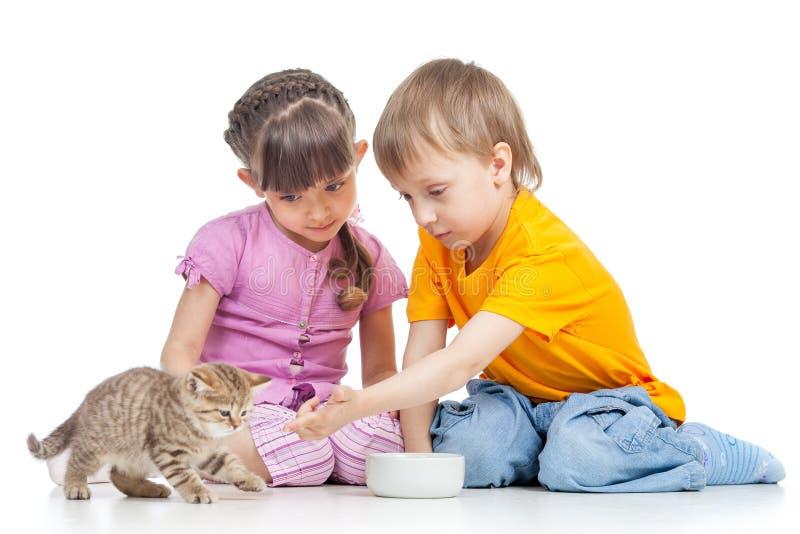 Niños muchacho y gatito de alimentación del gato de la muchacha fotografía de archivo libre de regalías