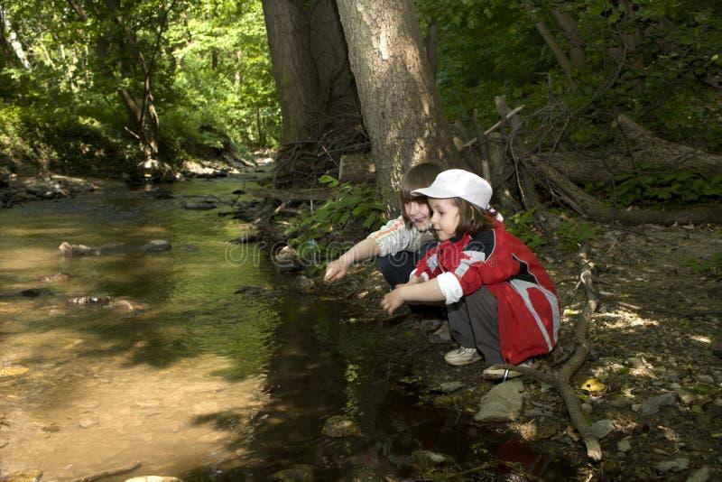 Niños por la cala del bosque imagen de archivo libre de regalías