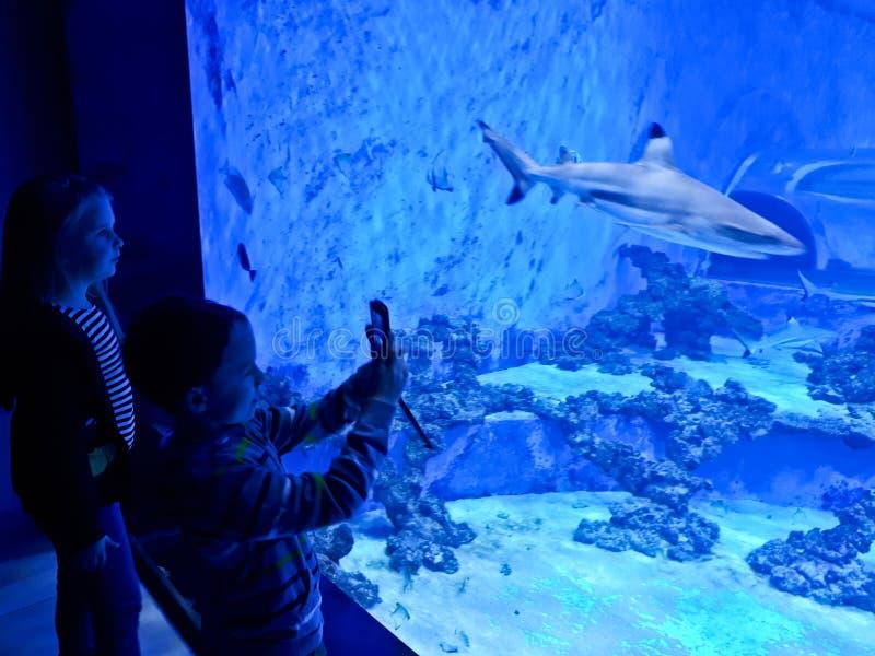 Niños que admiran el acuario grande con los tiburones y los pescados exóticos imagenes de archivo