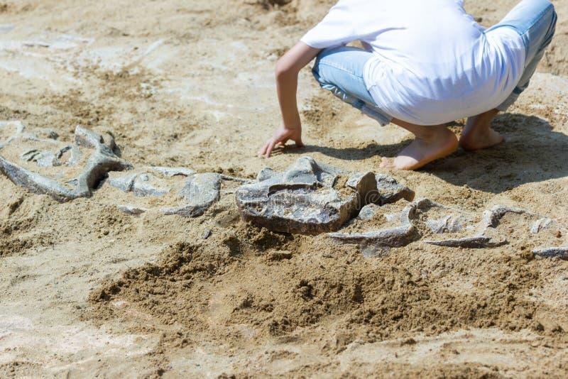 Niños que aprenden alrededor, simulación de excavación de los fósiles de dinosaurio foto de archivo