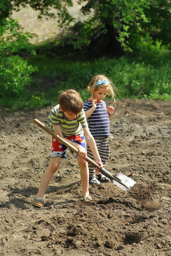 Niños que ayudan a plantar las patatas en el jardín fotos de archivo libres de regalías