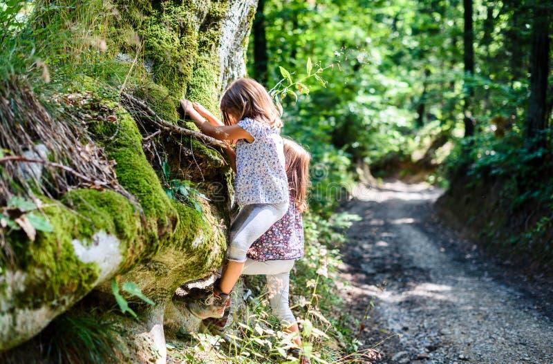 Niños que caminan en las montañas o el bosque que sube el árbol foto de archivo