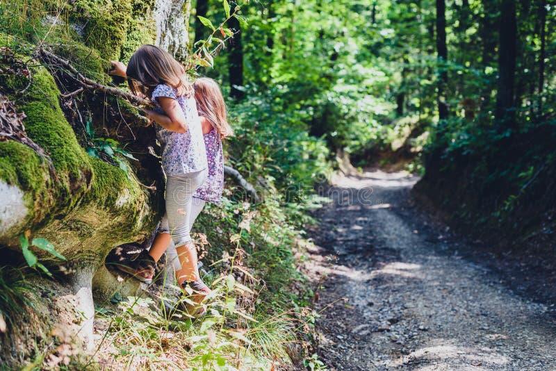 Niños que caminan en las montañas o el bosque que sube el árbol imagenes de archivo