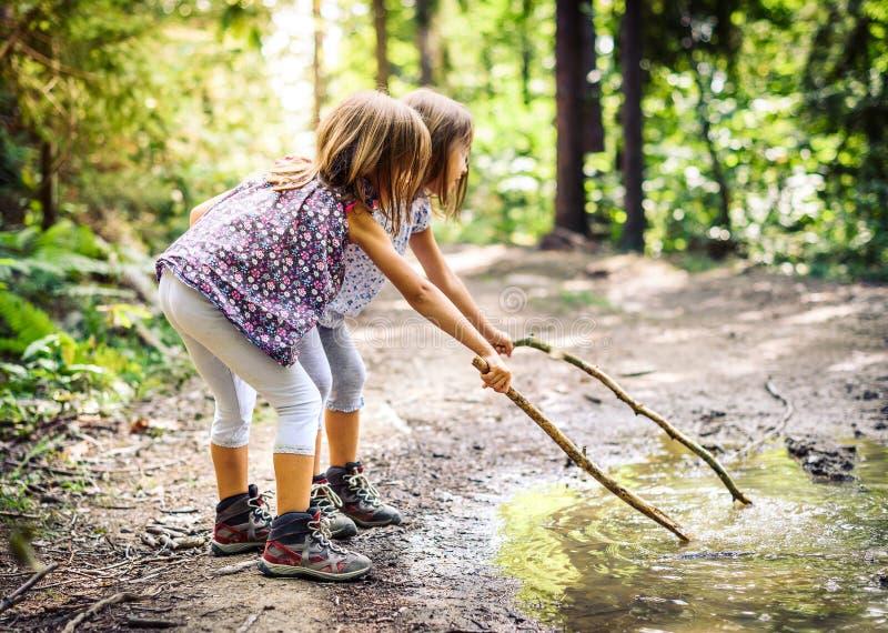 Niños que caminan en montañas o bosque con el deporte que camina los zapatos imagen de archivo libre de regalías