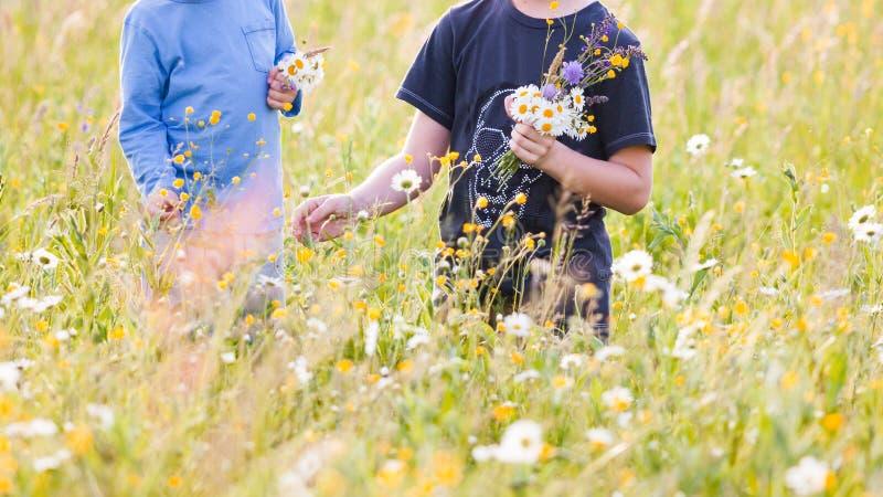 Niños que escogen las flores en un prado imagen de archivo
