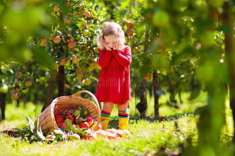 Niños que escogen manzanas en granja en otoño imagenes de archivo