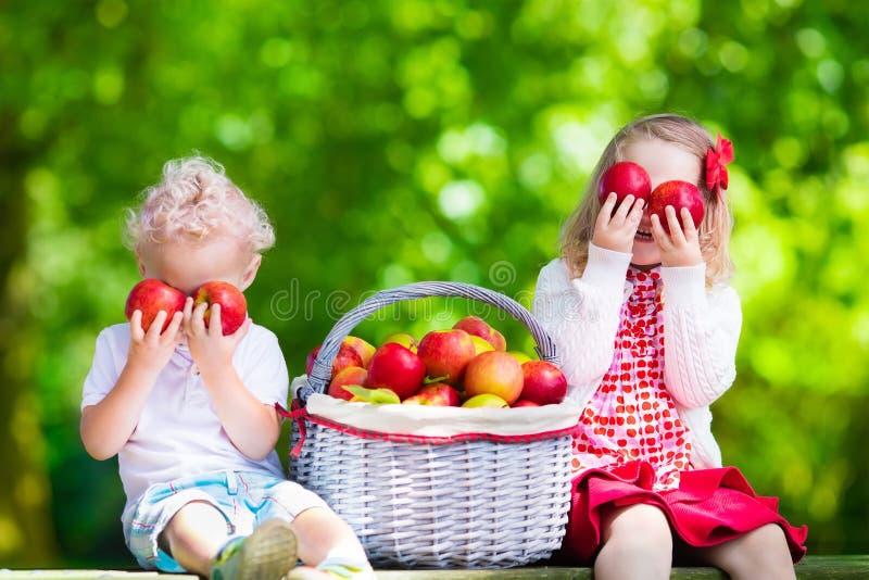 Niños que escogen manzanas frescas foto de archivo