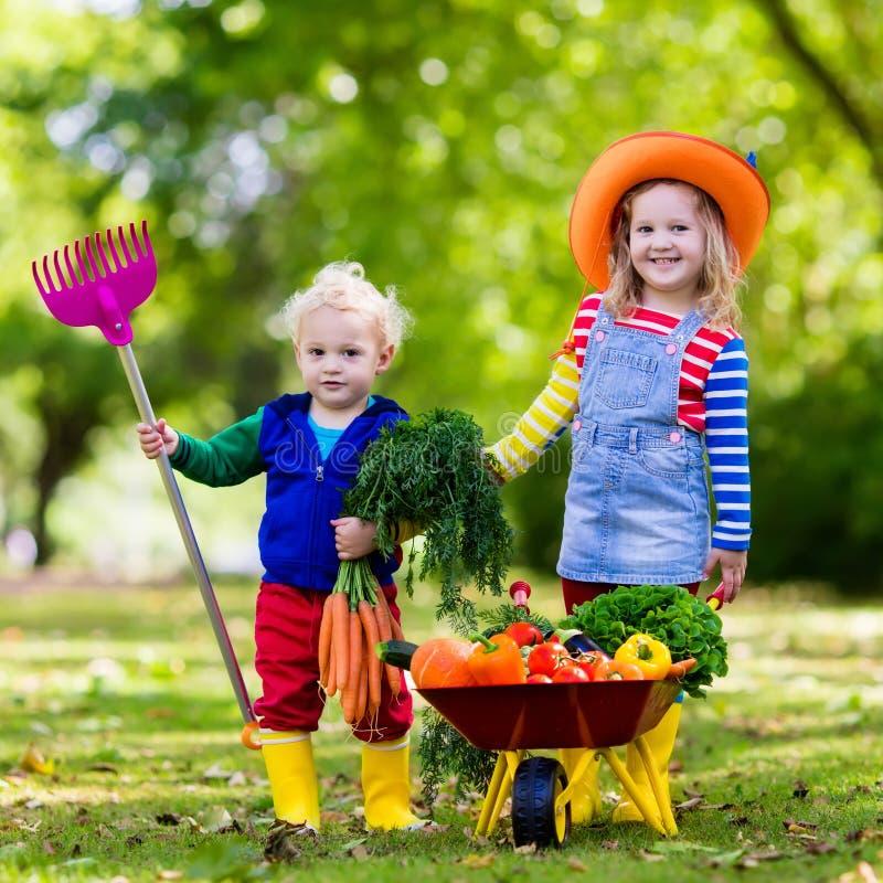 Niños que escogen verduras en granja orgánica foto de archivo