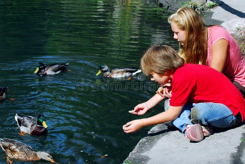 Niños que introducen patos imagenes de archivo