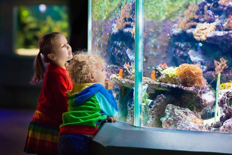 Niños que miran pescados en acuario tropical imagenes de archivo